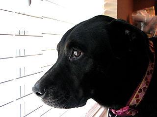 Chloe looks on